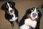 picture of Stella and Trexler