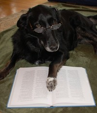 Jazz Loves to Learn!