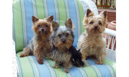 Angus, Sabrina and Ace