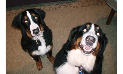 Stella and Trexler